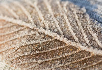 Closeup macro shot of a frozen leaf in winter covered by beautiful ice crystals