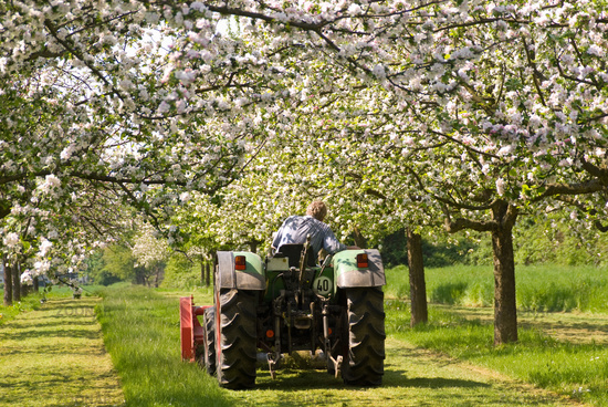 Tractor on a orchard meadow
