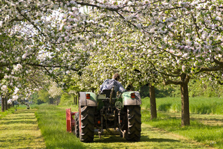 Traktor auf einer Streuobstwiese