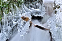 at the frozen stream in the forest