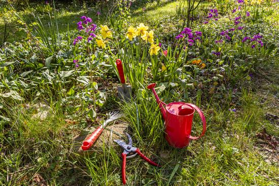 Gardening in the garden in spring