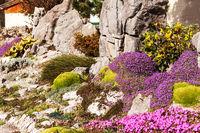 Beautiful artificially created rock garden