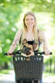 French bulldog dog enjoying riding in bycicle basket in city park