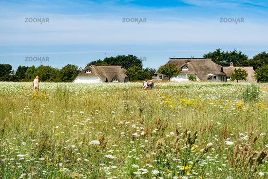 Beautiful holiday homes in Ahrenshop, Fischland-Darss, Mecklenburg-Vorpommern, summer 2020