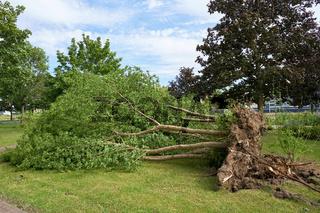 Umgestürzter Baum nach einem Sturm