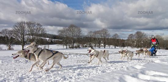 Dogsled race Clausthal-Zellerfeld 2015