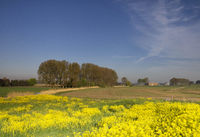 Landscape with rapeseed
