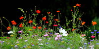 Colorful flower meadow in the primary color green with black background