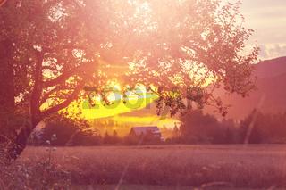 Fog on meadow. Washington