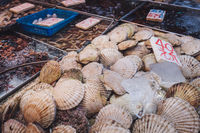 clams, sea shells or mussels on seafood and fish market