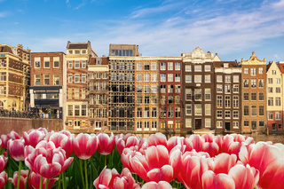 Amsterdam Netherlands, city skyline at canal waterfront and bridge with spring tulip flower