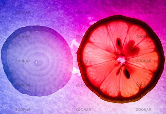 Onion and lemon thin slices macro capture, colorfully illuminated and back lit
