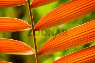 Tropische Pflanze im Regenwald von Costa Rica