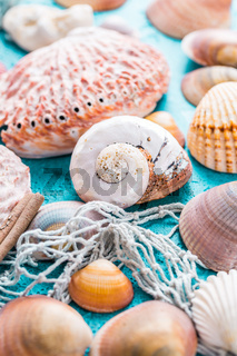 Assortment of seashells on blue background. Summer beach and holiday concept.