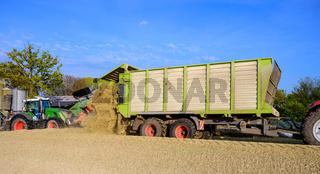 Maisernte für die Fütterung der landwirtschaftlichen Tiere