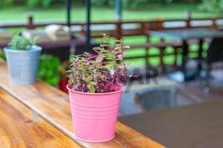 Garden pot with beautiful bright flower