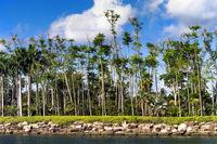 Rocky Shore, Tropical Palm Trees.