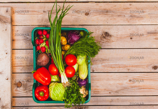 Ecological set of raw vegetables stacked in a basket