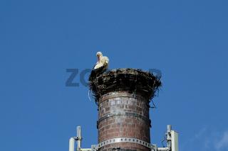 Storch im Nest am Schornstein