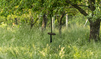 Swing from a wooden disc hangs on a thick rope in an overgrown garden