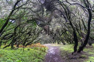 Im Nationalpark Garajonay auf La Gomera