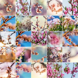 Blossom tree collage