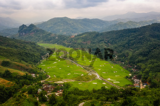 typical Vietnamese landscape in spring with rice fields