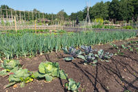 Dutch allotment garden with coal, unions, leek and shed