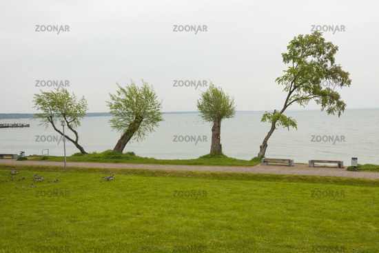 Four Trees by the lake