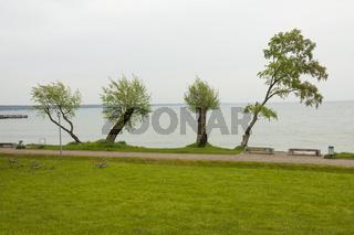 Vier Bäume am See