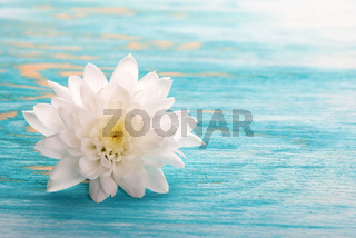 Background with white Blossom on turquiose Wood with Copy Space