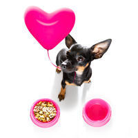 valentines dog in love with balloon in mouth