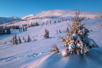 Alpine resort ski slopes and lifts. Pre sunrise morning Svydovets mountain ridge and snow-covered fir trees view, Dragobrat, Ukraine Carpathians.