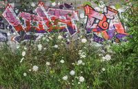 Meadow with caraway plants in front of the graffiti wall