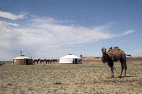 Yurts of a family of Mongolian Arates in the Gobi Desert, photo taken in 1977