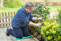 Caucasian senior woman pruning branch in garden