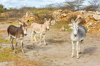 Colorful donkeys standing in wild nature