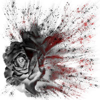 dramatic splash effect single black rose floral digital art with red highlights on a white background
