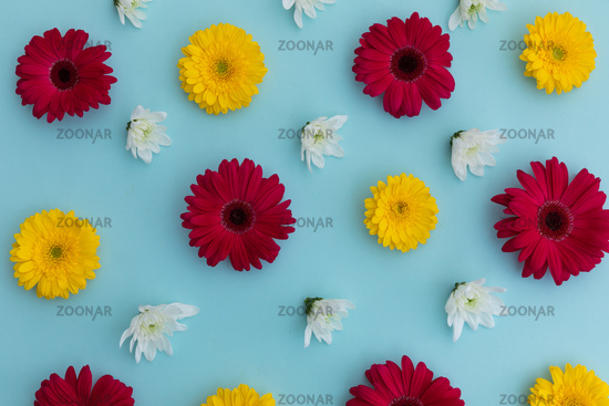 Yellow and red gerberas and white flowers on blue background