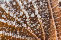 Closeup macro shot of a frozen brown leaf in winter covered by beautiful ice crystals