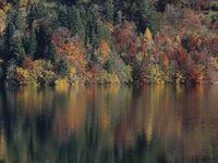 Autumn scene at the shore of Lake Wagital.