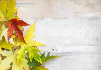 Colorful leaves on old wooden backdrop