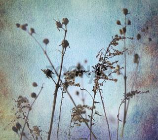 gräser silhouetten aquarell