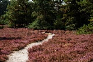 Heide (Südheide)