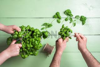 Homegrown basil pot. Basil harvest. Couple gardening.