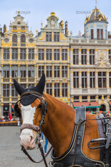 Horses on Grote Markt square in Brussels Belgium