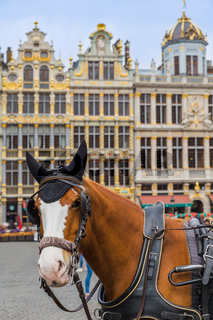 Horses on Grote Markt square in Brussels Belgium