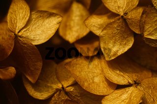 Bouquet of dried flowers. Textured flower buds