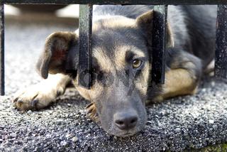 Strassenhund, bettelnd