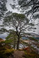 park around Loch Shiel at Ardgour Island